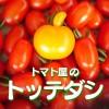 tottedashi_pd_artwork